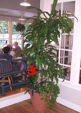 smallCaneRestaurant