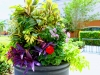 Inviting Entry Plantings: Mix It Up