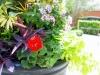 Inviting Entry Plantings: Closeup