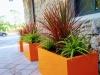 Tangerine Pop: Container Plantings