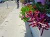 Rail Box Color Planting: Island Style
