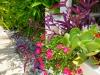 Rail Box Color Planting: Close Up