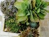 Succulent Plants By Beach