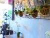 Orchid-Studded Cafe