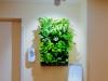 Mini Green Wall