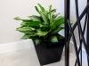 Simple and Polished Aglaonema Floorplant