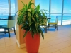 Plant with a view
