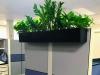 Cubicle top plantings