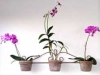 smallThreeOrchids