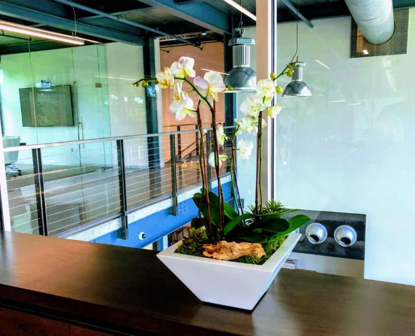 Orchid arrangement in modern white planter