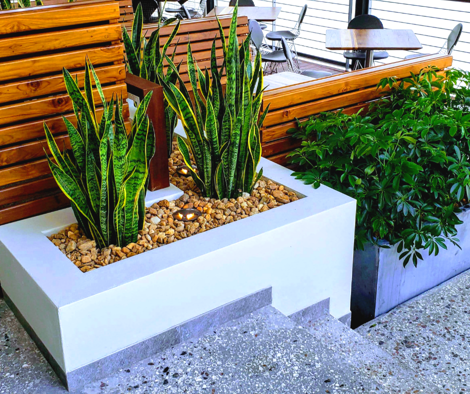 Snake plant and shrubbery used in restaurant seating area
