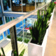 Office plants for modern workplaces Sarasota