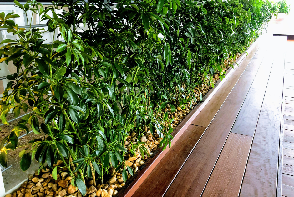 Custom wooden planters with green hedge