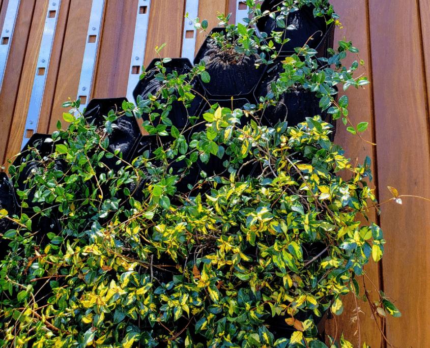 GrowUp Green Wall with jasmine closeup