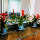 Colorful floral arrangement live plants