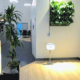 Green wall for Sarasota startup office