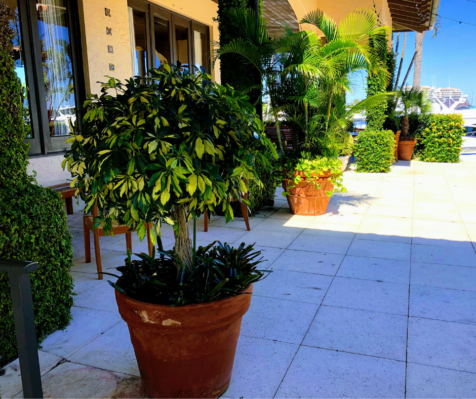 marina resort plantings landscape plants
