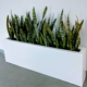 Plant service program for modern office Sarasota Snake Plants in tall windowbox