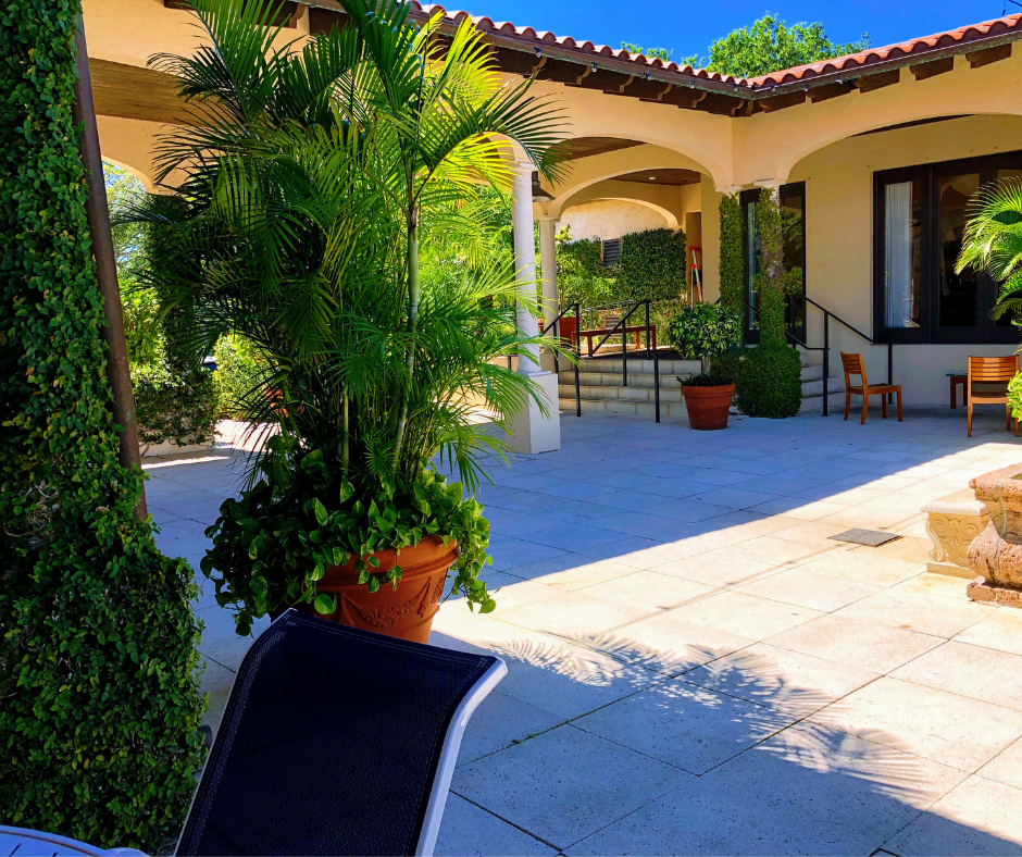 courtyard plantings decorative tropical plants