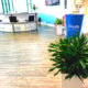 Indoor plant service, dracaena bushes in tall planters and live flowers guzmanias on desk
