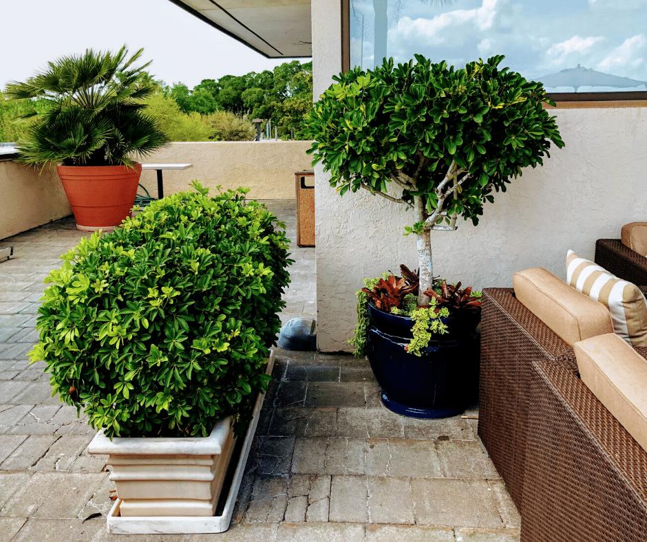 Tropical balcony plantscape