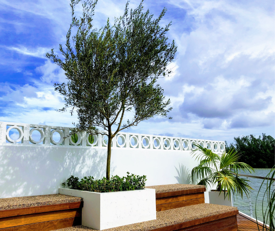Contemporary look planting with olive tree and palm on waterfront deck