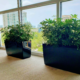 Indoor plants for work shrubs as green dividers