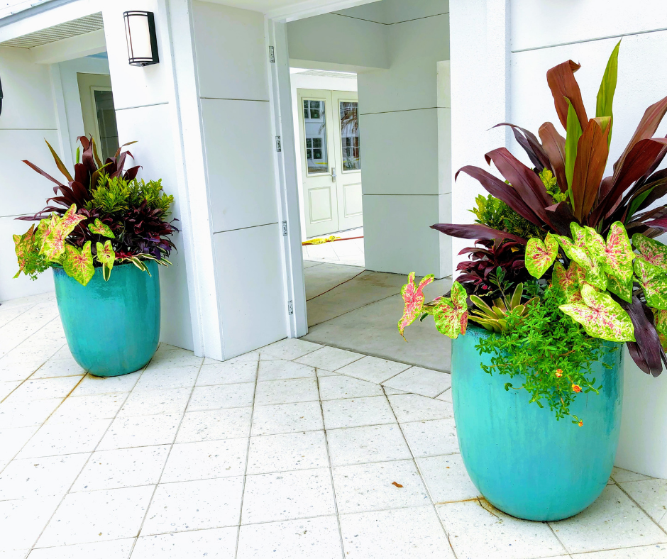 Entry plantings with mixed color
