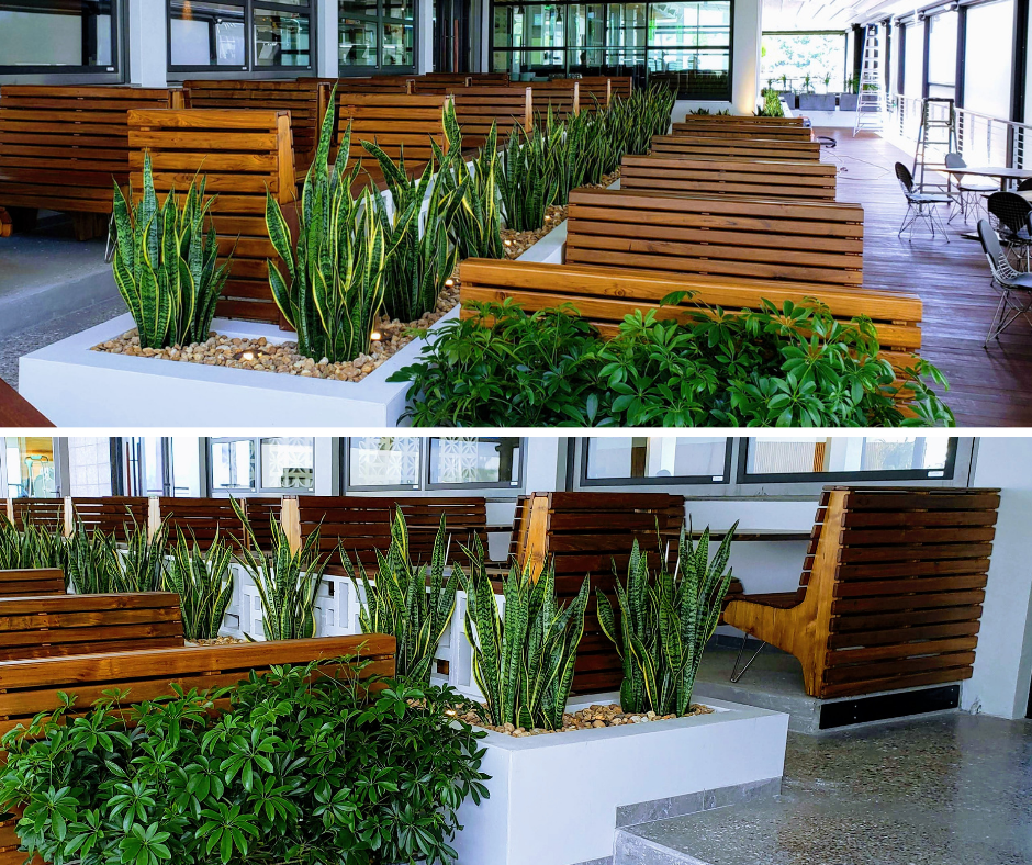 Modern plantings at new restaurant