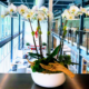 Orchid arrangement in low bowl
