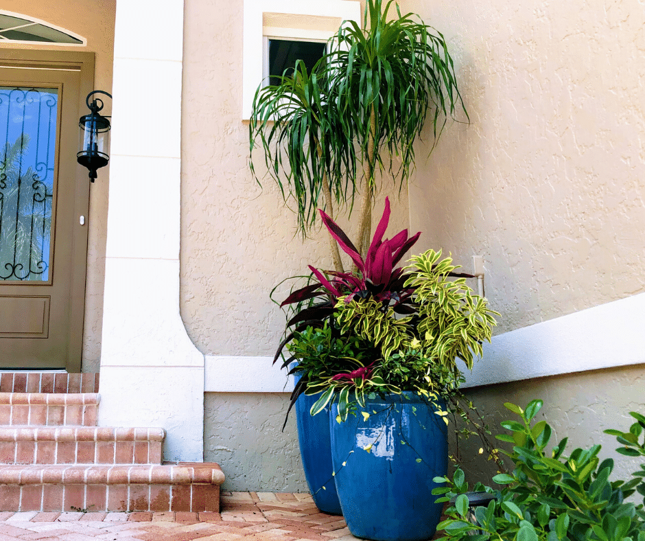 entryway plantings in ceramics mixed color planting and tall ponytail