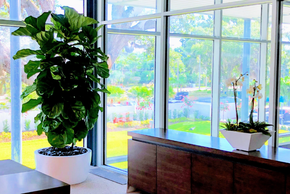 Professional plantscape live plant service for office