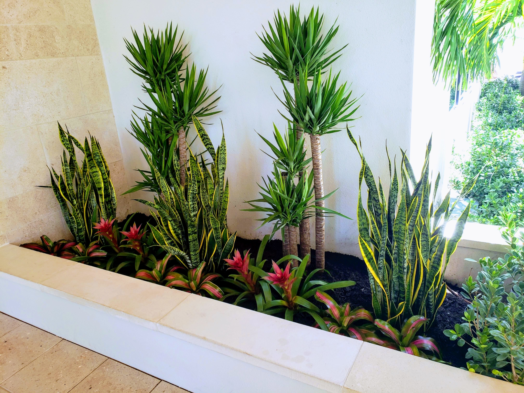 Entryway plantings at Florida country club zeroscape-style plants with bromeliads snake plants and yucca