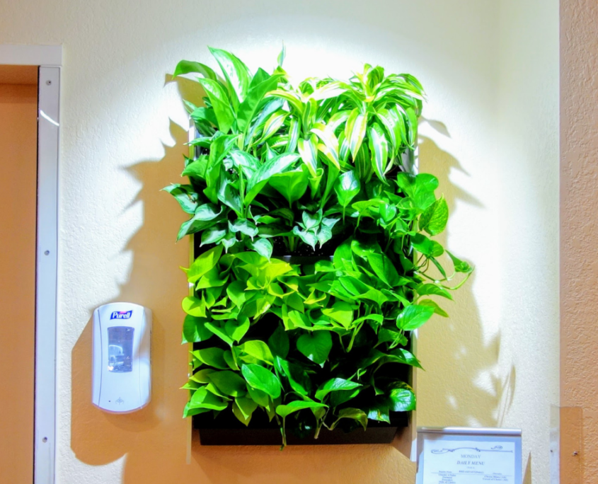 Green wall plants