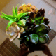 Office plant succulent arrangment