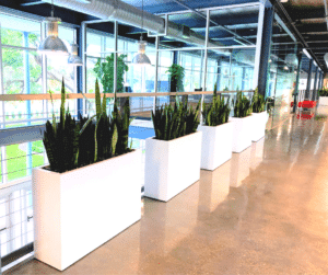 Modern white office planters and plants in Sarasota office