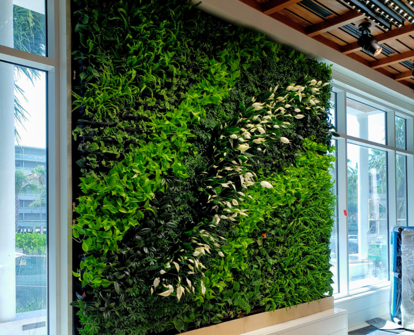GSky Living Green Wall in Sarasota installed by Plant Parents