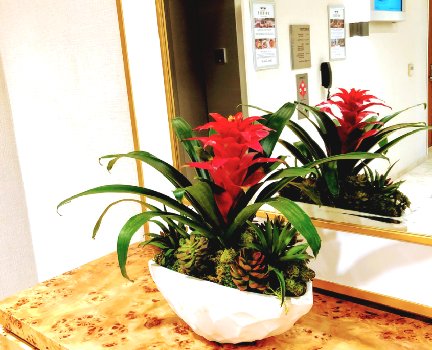 Live flower bromeliad arrangement rental