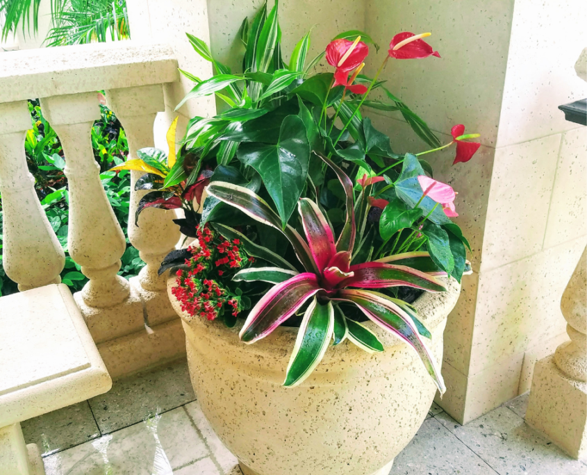 Tropical planting plant service