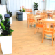 Event space plantings