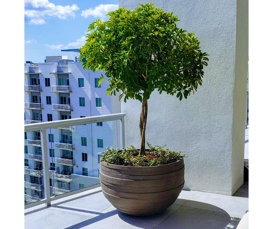 Balcony planting in Sarasota
