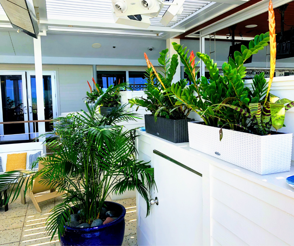 Plants for hospitality and retail