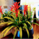Live plant centerpiece arrangement