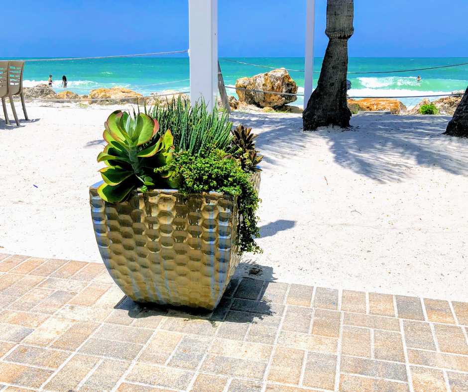 Succulents professionally maintained on beach in ceramic pot