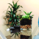 Conference room plants for office