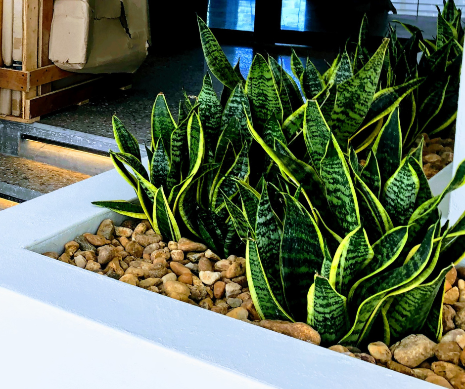 Custom plantings for built in beds at modern restaurant