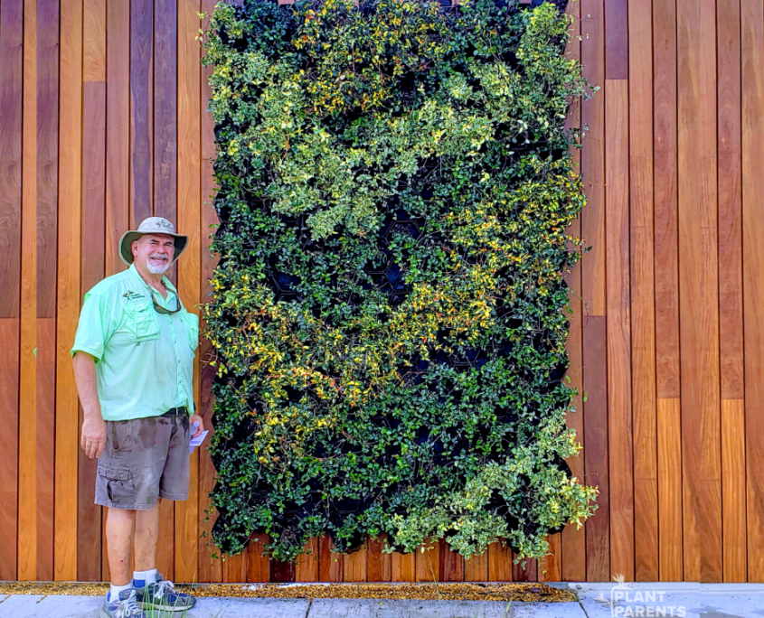 David Glosser and GrowUp Greenwall made with Jasmine.