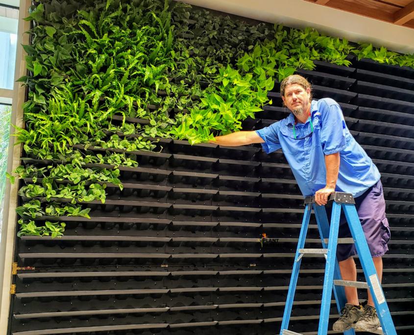 Plant Parents team member installing GSky Living Green Wall in Sarasota Florida