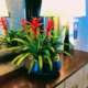 Bromeliad arrangement