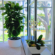 High end plant service Sarasota Florida